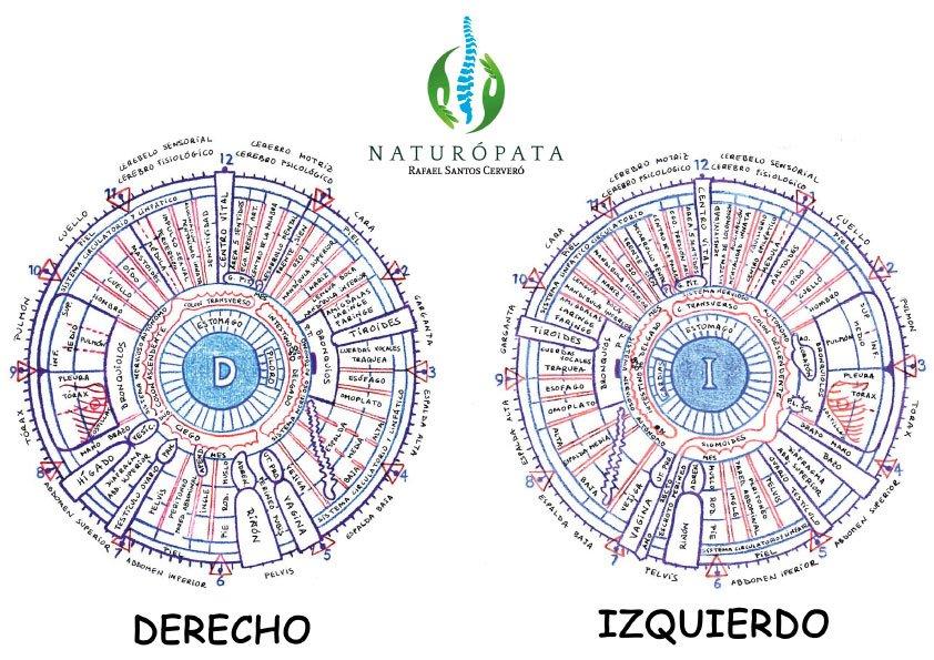 mapa iridiologico